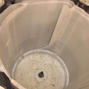 洗濯槽 分解 掃除